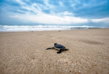 Come and watch the turtles hatch in Bundaberg and stay at the Sugar Country Motor Inn or Takalvan Motel.