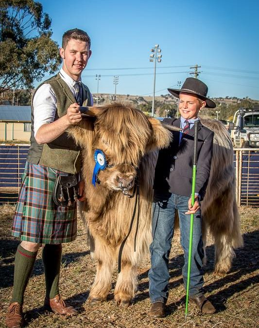 Scottish Highland Cattle Come to Junee